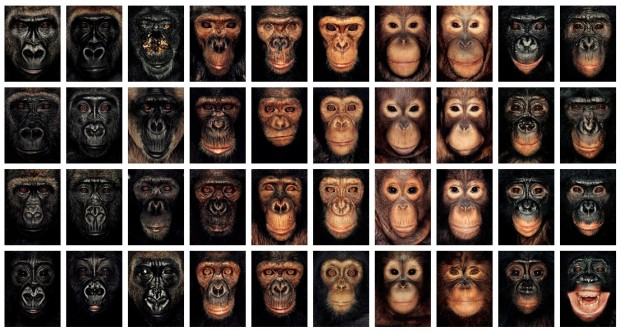"""James and Other Apes"" by James Mollison, 2004"