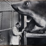 Ingmar Bergman and the shark from Jaws by John Bryson, 1975