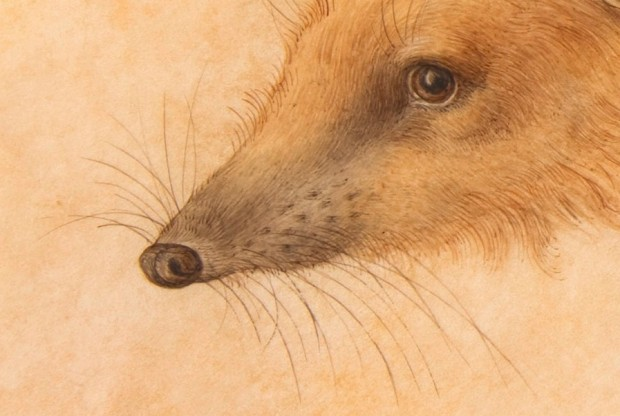 """""""A Hedgehog"""" (detail) by Hans Hoffmann, watercolor and gouache on parchment, 7 7/8"""" x 11 3/4"""", before 1584"""