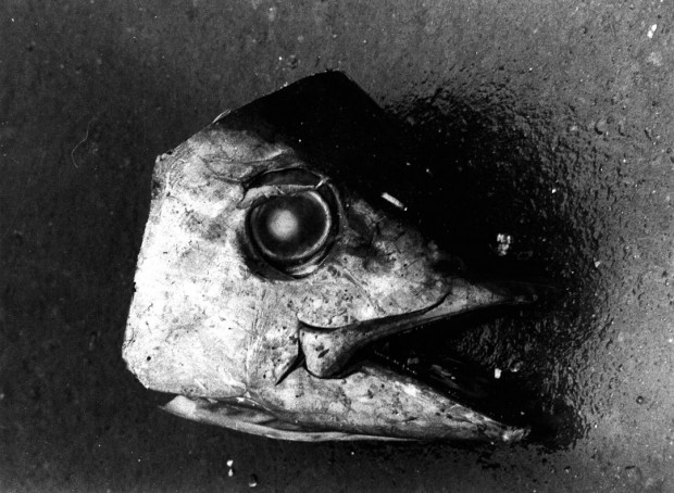 "Untitled (Fish Head) by Daido Moriyama, Tsugaru Straits, gelatin silver print on fibre paper, 11"" x 14"", 1978."