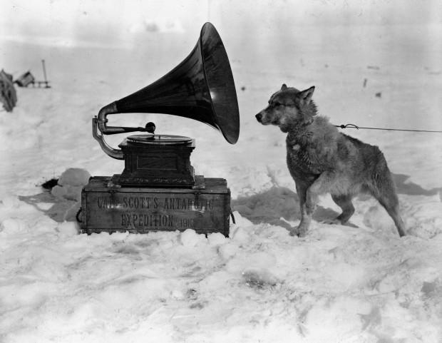 """Dog Chris, listening to the gramophone, Antarctica"" by Herbert Ponting, b&w original photograph, silver gelatin print, 117 x 93 mm, circa January 1911"